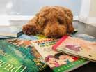 Leselernsettings mit Pudel Boris für Kinder
